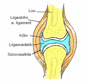vitamiinide liigestest sustavo ola valus