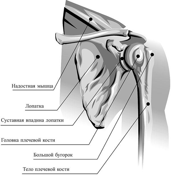 mis salv on ola liigese artroosis parem