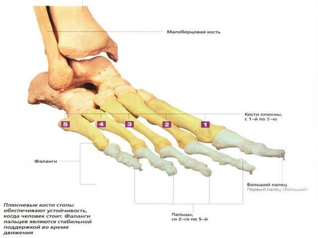 valu jalgsi liigestes koos lamedaga