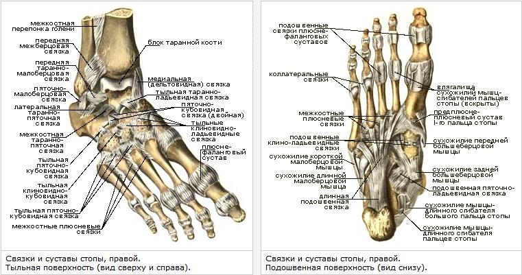 liigeste tootlemine jalgsi