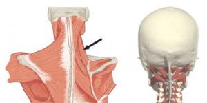 ola liigeste artroos radiomed norgad lihased valus liigesed