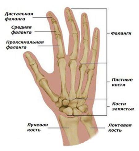 sorme liigeste poletik