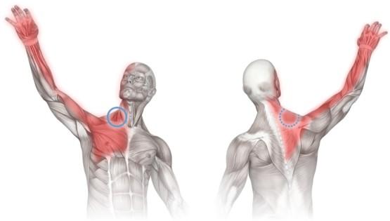 kreem artroosi raviks