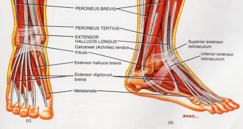 hoori liigesed parast horisontaalset baari artriidi katekreem