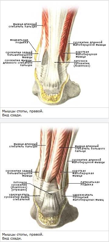 kate liigeste anesteesia tabletid uldise valu liigeste valu