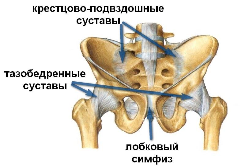 liigeste luud haiget