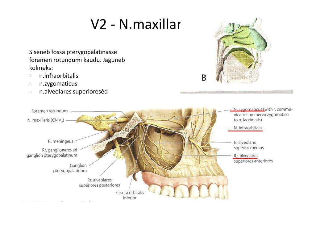 neurosi valu liigestes glukoosamiin ja kondroitiin vietnamist