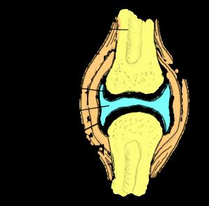thumbi jala liigeste poletik insult kahjustas liigendit